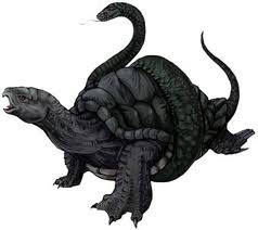 tortue noire